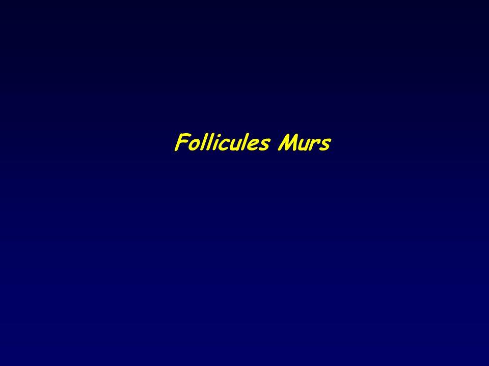 Follicules Murs