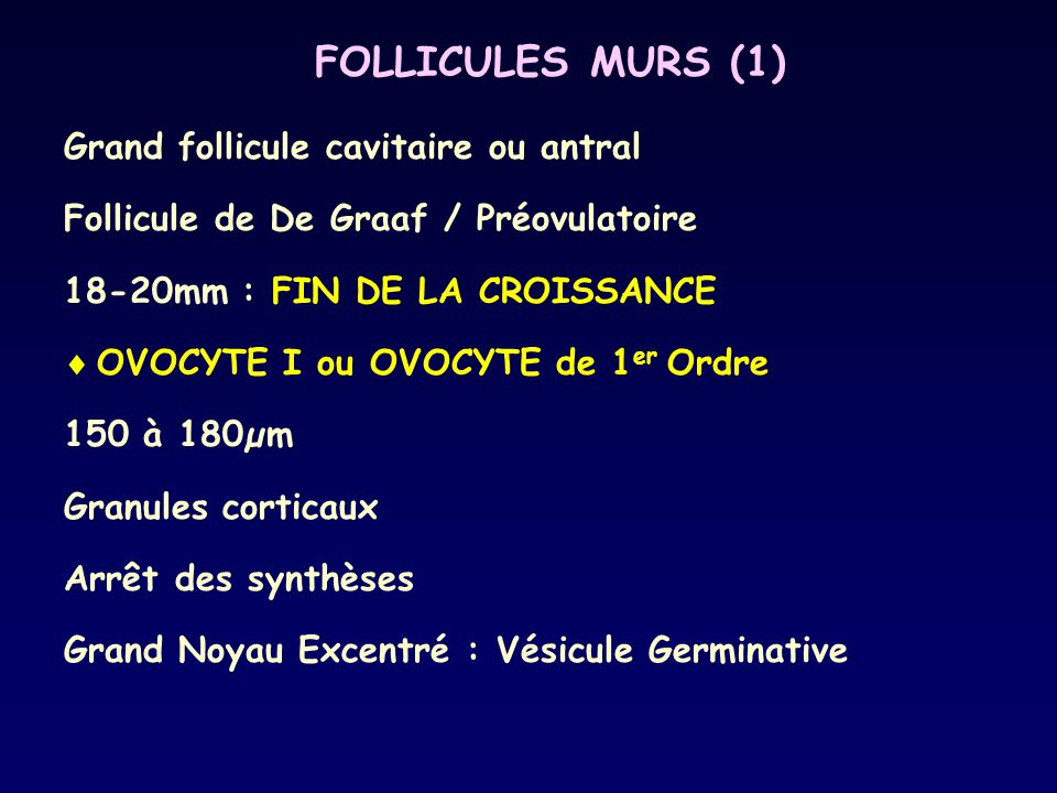 FOLLICULES MURS (1) Grand follicule cavitaire ou antral