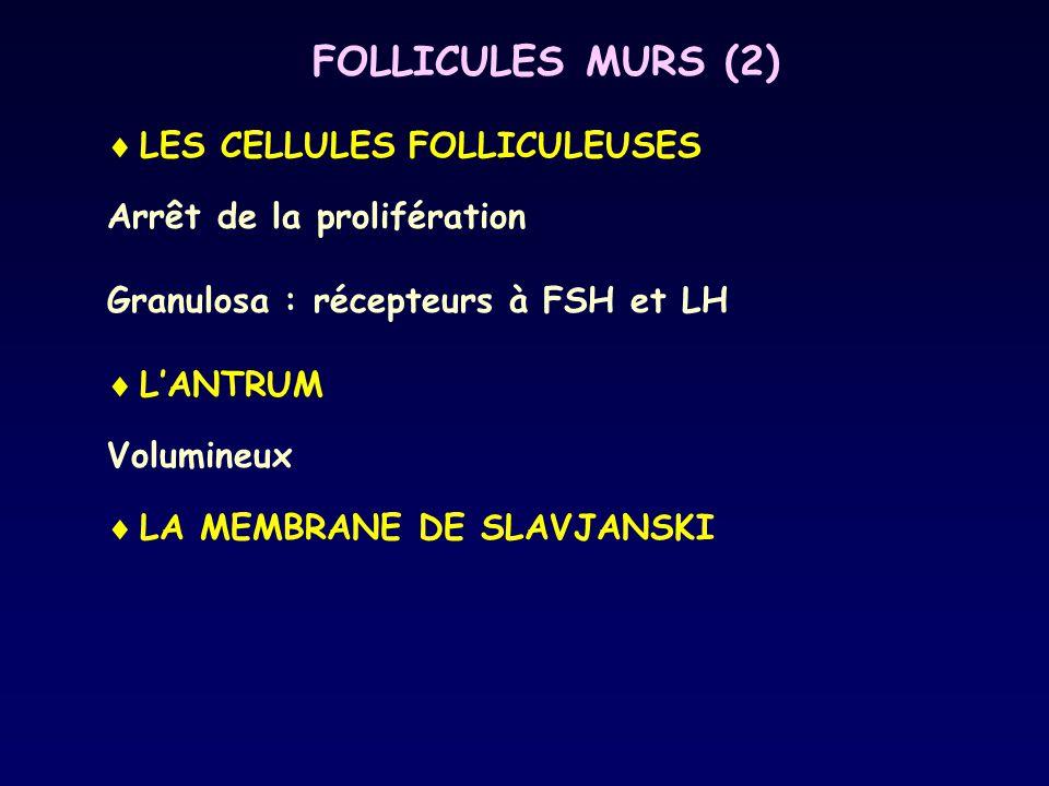 FOLLICULES MURS (2) LES CELLULES FOLLICULEUSES