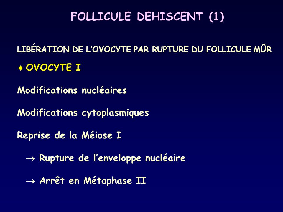 FOLLICULE DEHISCENT (1)