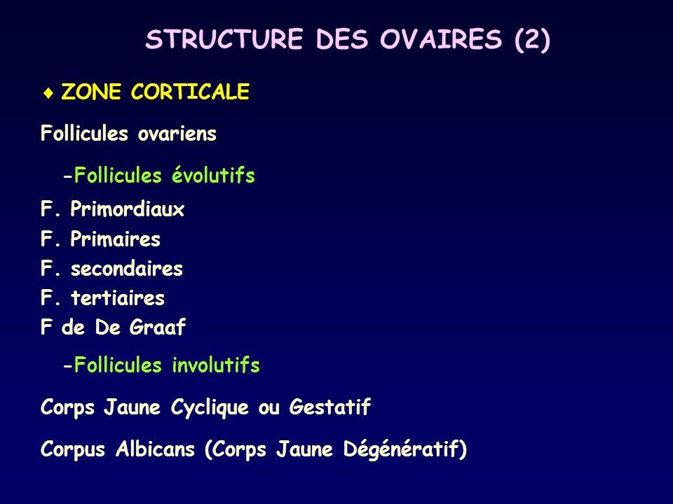 STRUCTURE DES OVAIRES (2)