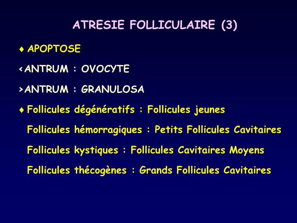 ATRESIE FOLLICULAIRE (3)
