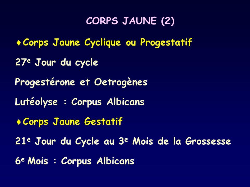 CORPS JAUNE (2) Corps Jaune Cyclique ou Progestatif. 27e Jour du cycle. Progestérone et Oetrogènes.