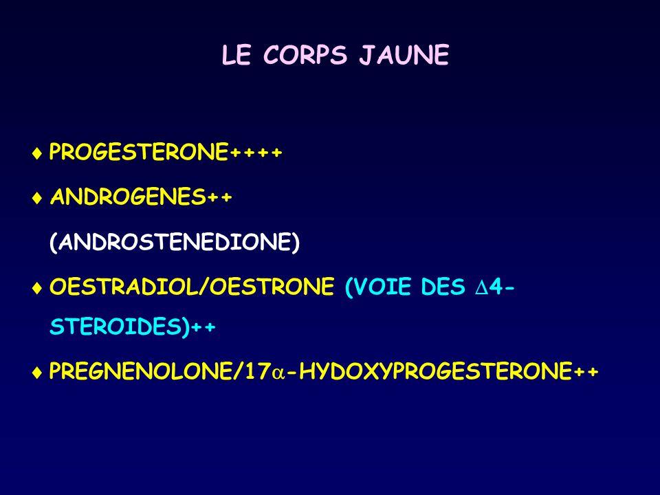 LE CORPS JAUNE PROGESTERONE++++ ANDROGENES++ (ANDROSTENEDIONE)
