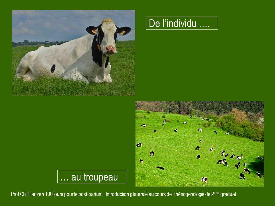 De l'individu …. … au troupeau