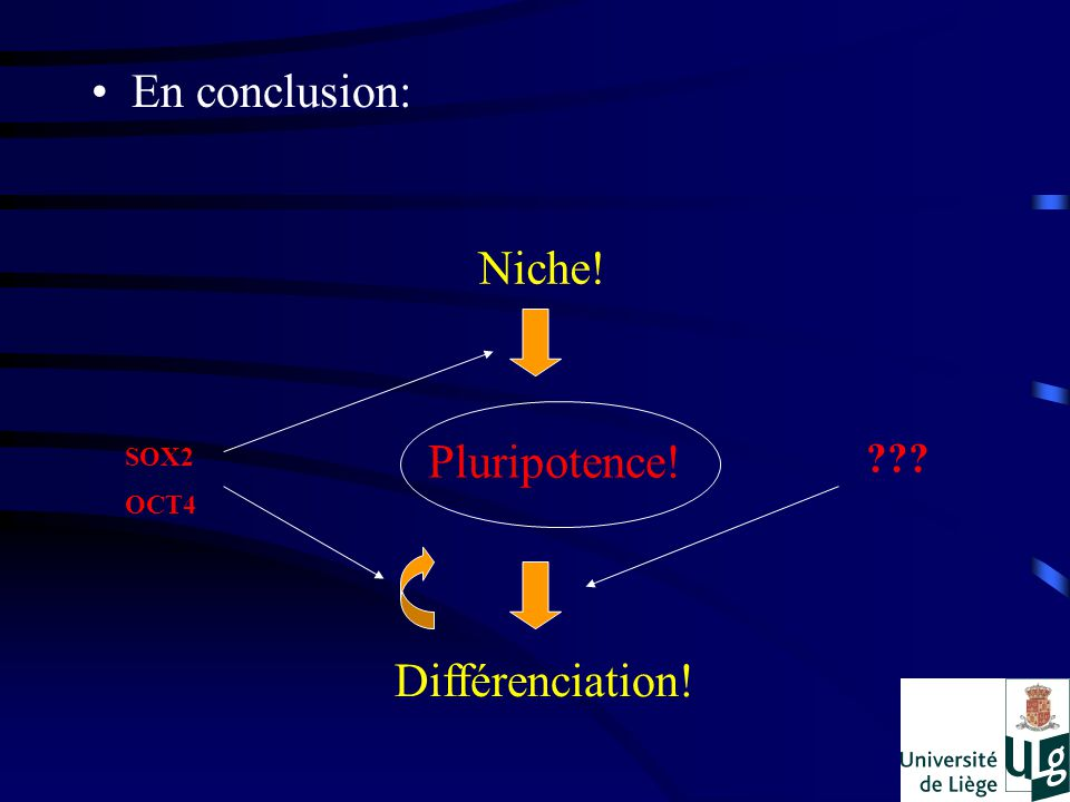 En conclusion: Niche! Différenciation! Pluripotence! SOX2 OCT4