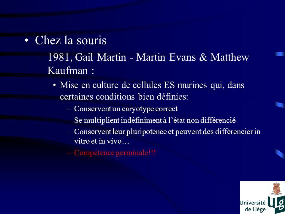Chez la souris 1981, Gail Martin - Martin Evans & Matthew Kaufman :