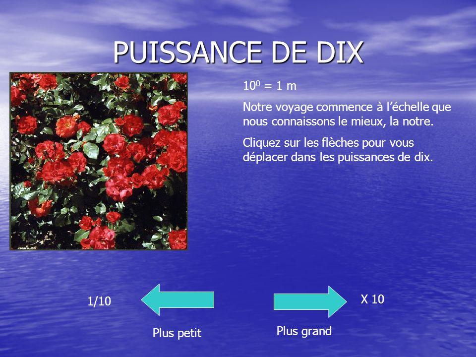 PUISSANCE DE DIX 100 = 1 m. Notre voyage commence à l'échelle que nous connaissons le mieux, la notre.