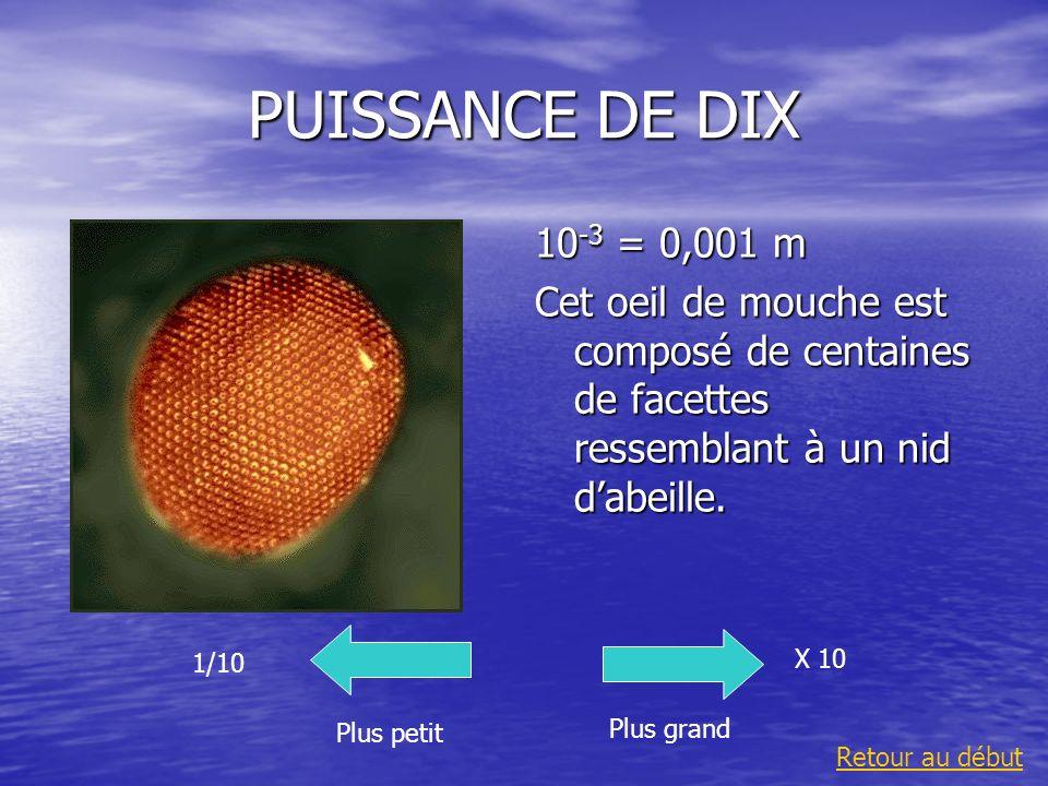 PUISSANCE DE DIX10-3 = 0,001 m. Cet oeil de mouche est composé de centaines de facettes ressemblant à un nid d'abeille.