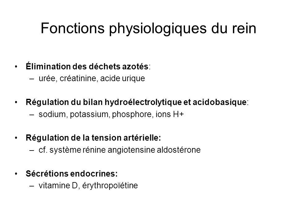 Fonctions physiologiques du rein