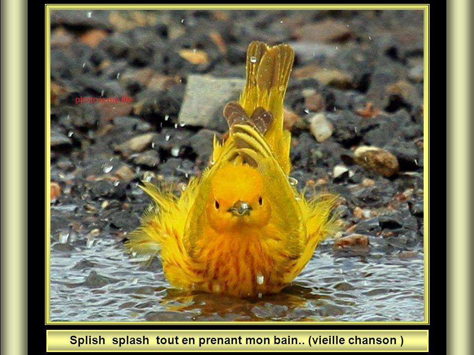 Splish splash tout en prenant mon bain.. (vieille chanson )