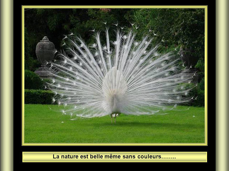 La nature est belle même sans couleurs……..