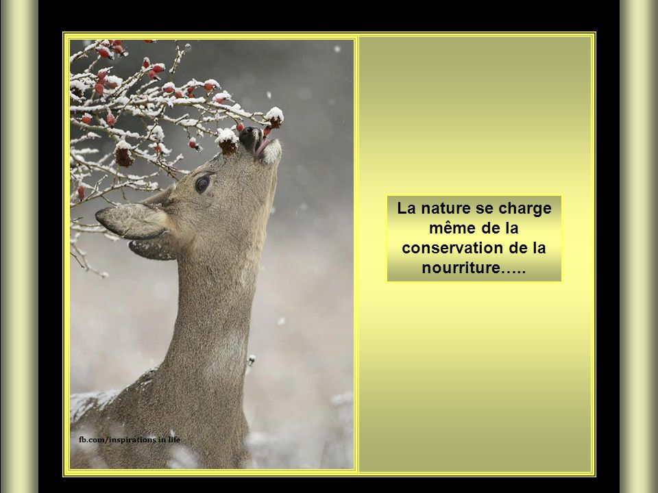 La nature se charge même de la conservation de la nourriture…..