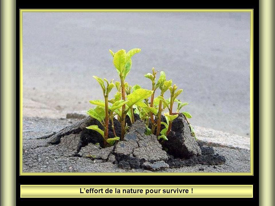 L'effort de la nature pour survivre !