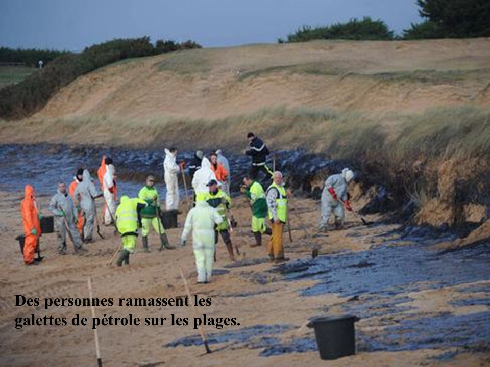 Des personnes ramassent les galettes de pétrole sur les plages.