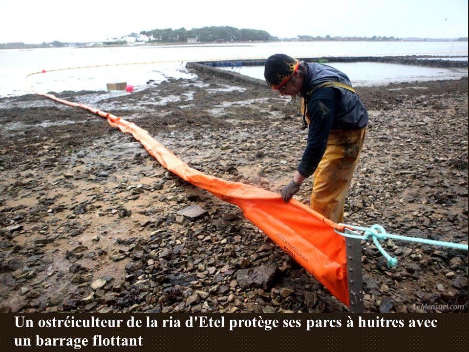 Un ostréiculteur de la ria d Etel protège ses parcs à huitres avec un barrage flottant