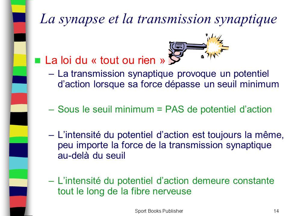 La synapse et la transmission synaptique