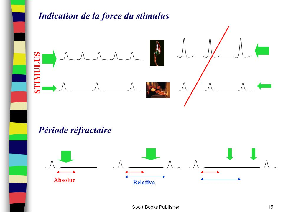 Indication de la force du stimulus