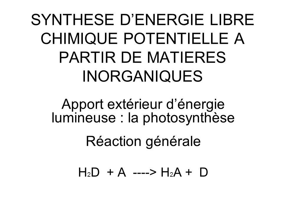 Apport extérieur d'énergie lumineuse : la photosynthèse
