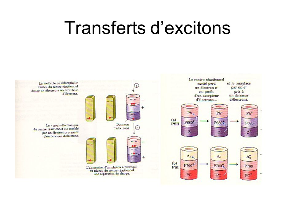 Transferts d'excitons