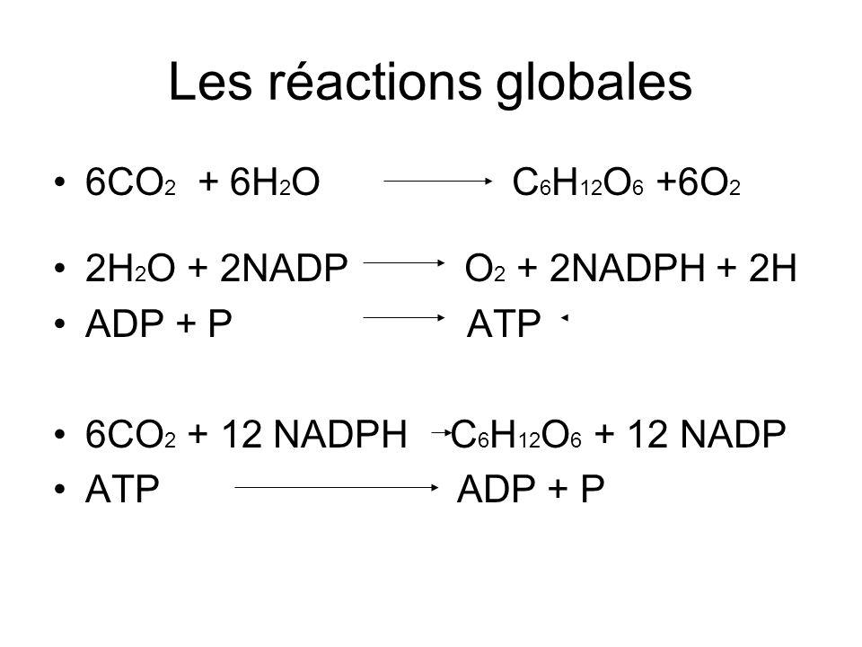 Les réactions globales