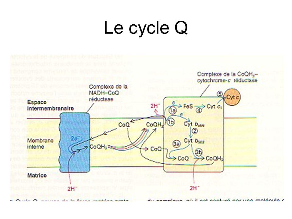 Le cycle Q