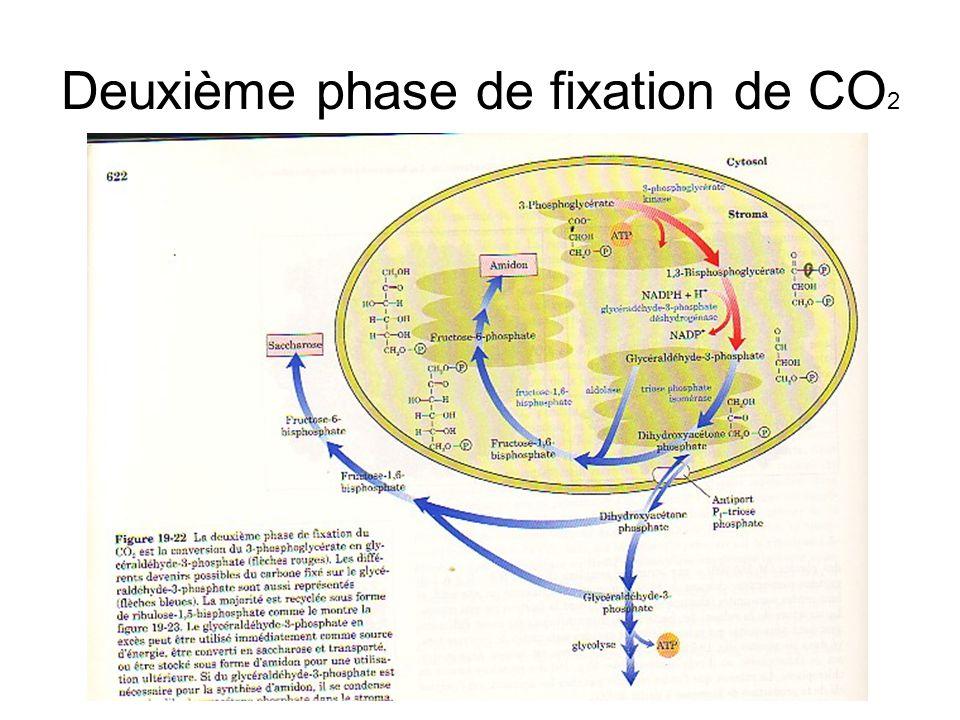 Deuxième phase de fixation de CO2