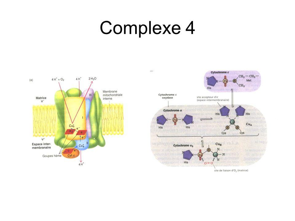 Complexe 4