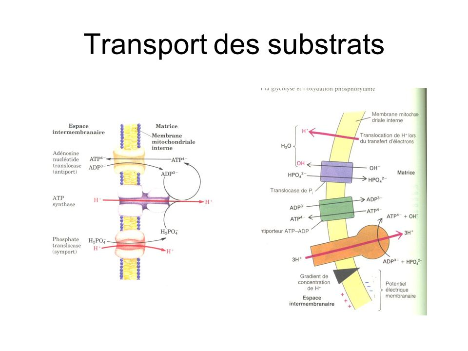Transport des substrats