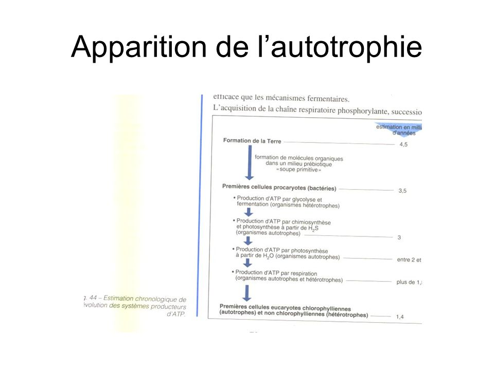 Apparition de l'autotrophie