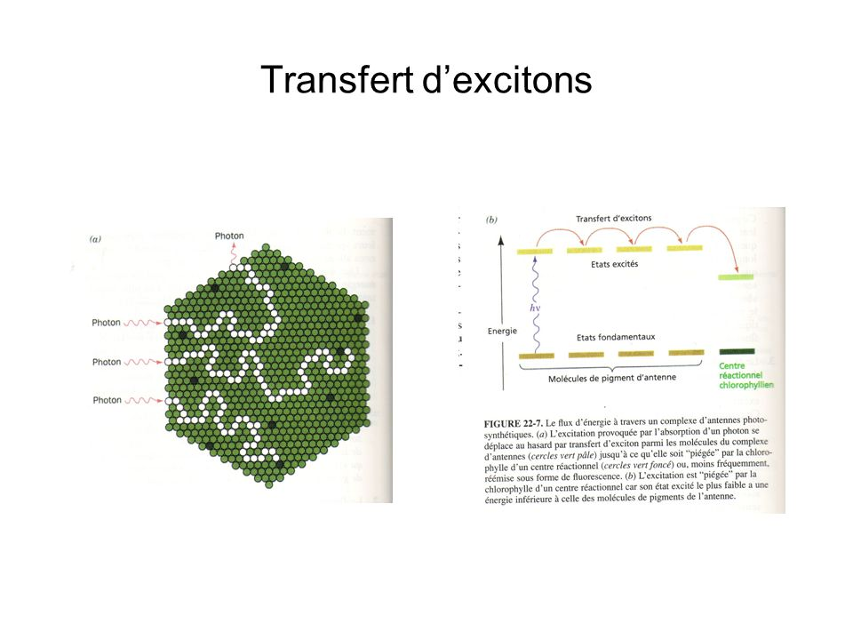 Transfert d'excitons