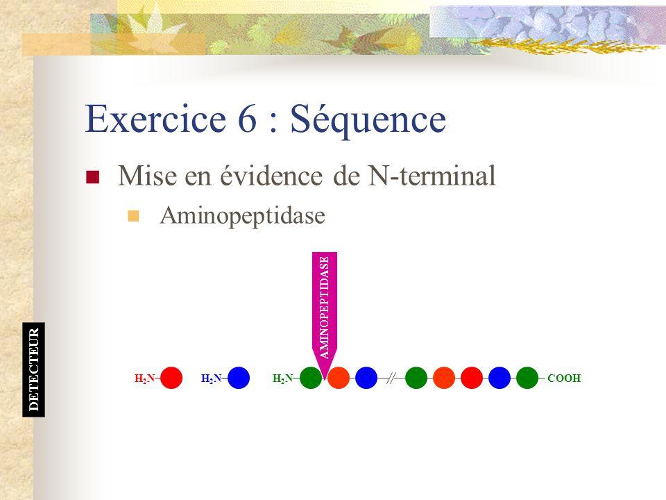 Exercice 6 : Séquence Mise en évidence de N-terminal Aminopeptidase