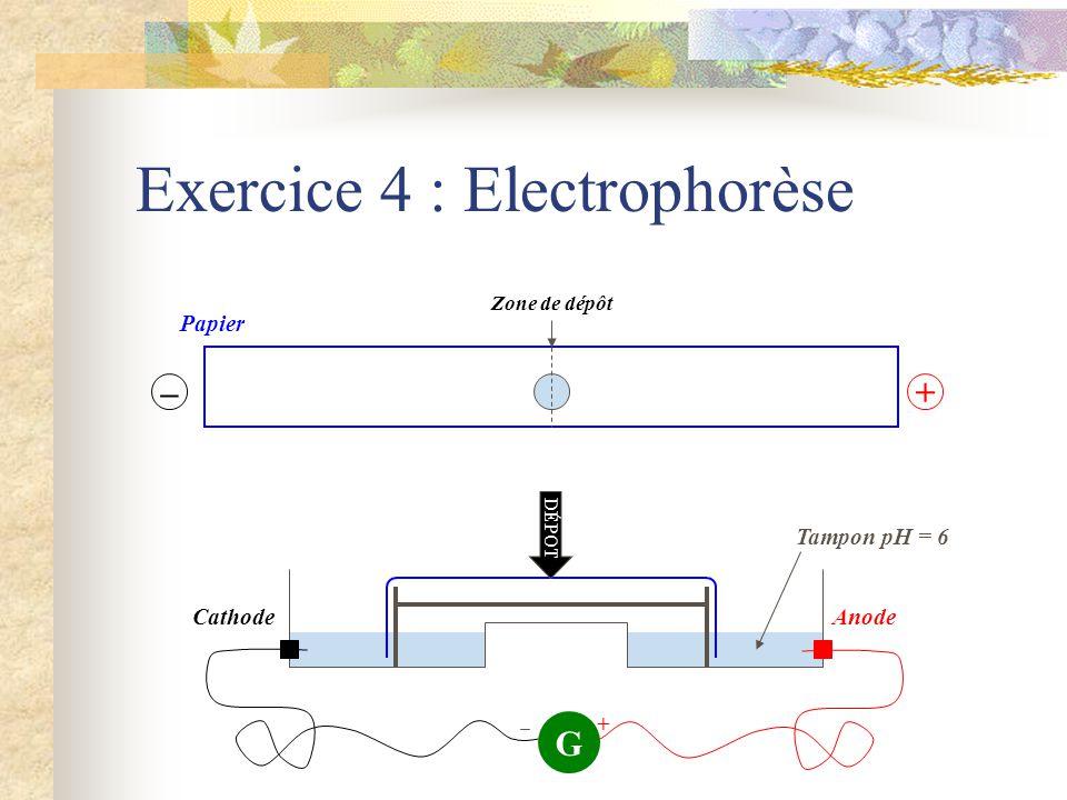 Exercice 4 : Electrophorèse