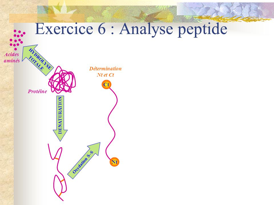 Exercice 6 : Analyse peptide