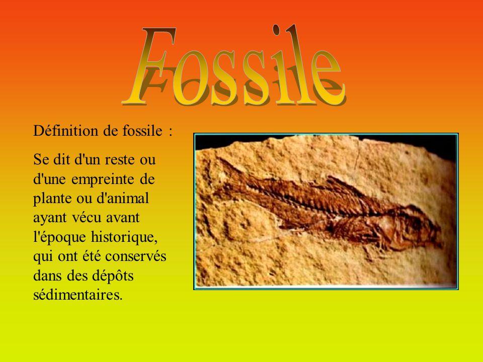 Fossile Définition de fossile :