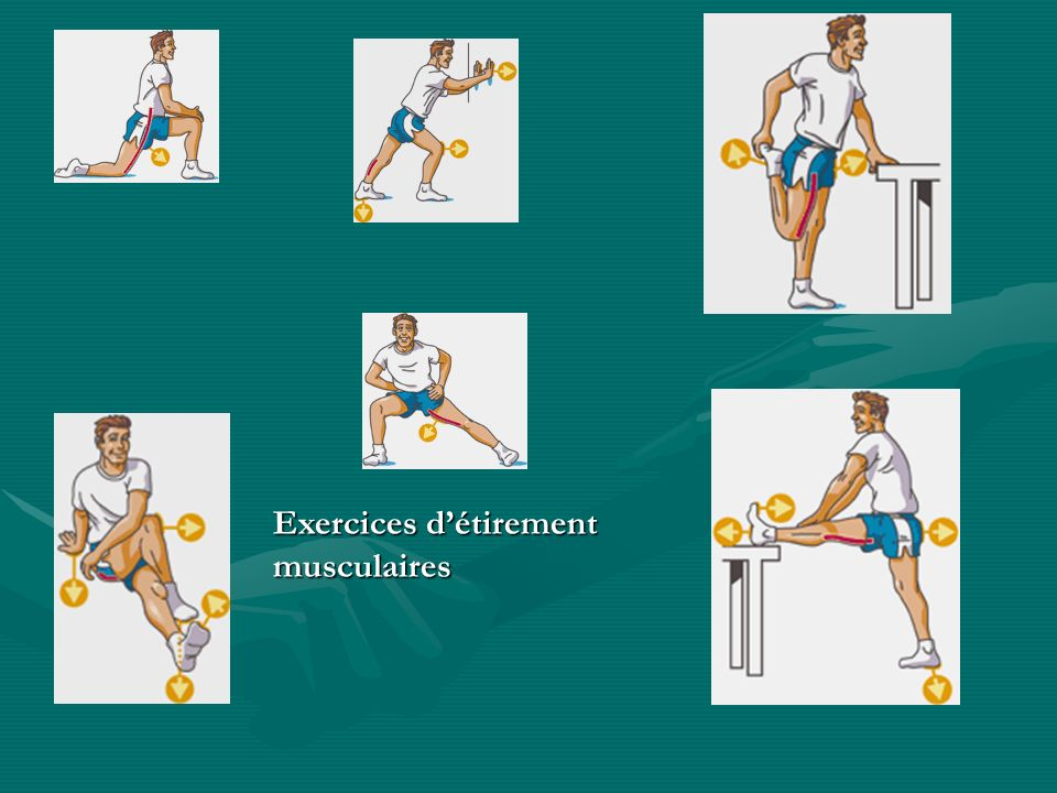 Exercices d'étirement musculaires
