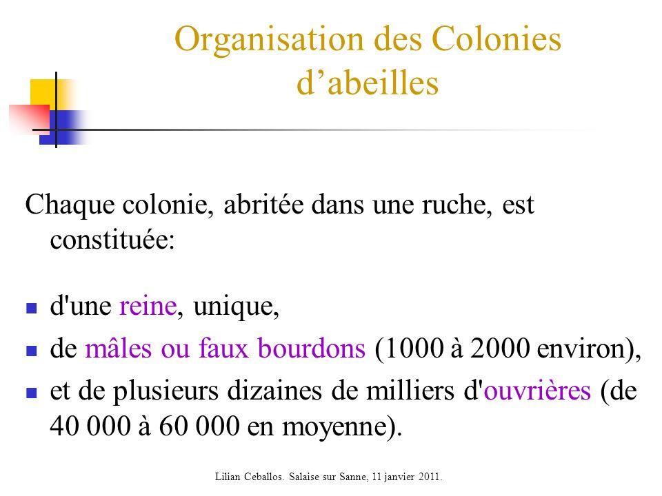 Organisation des Colonies d'abeilles