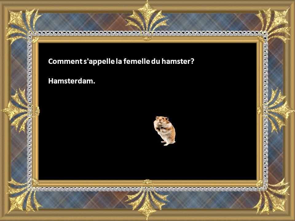 Comment s appelle la femelle du hamster