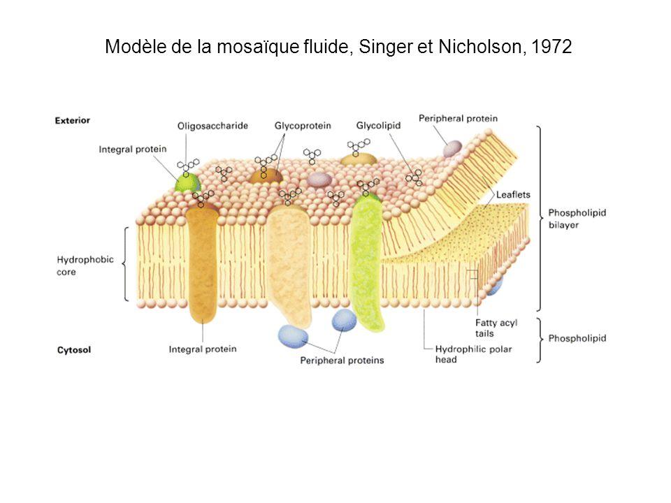 Modèle de la mosaïque fluide, Singer et Nicholson, 1972