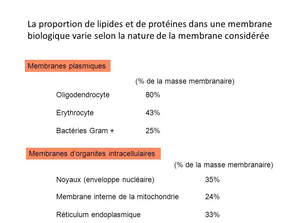 La proportion de lipides et de protéines dans une membrane biologique varie selon la nature de la membrane considérée