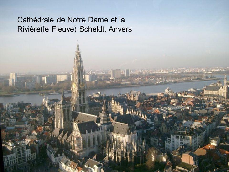 Cathédrale de Notre Dame et la Rivière(le Fleuve) Scheldt, Anvers