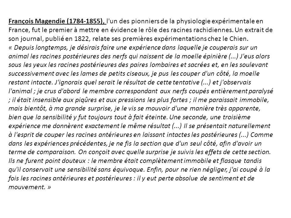 François Magendie (1784-1855), l un des pionniers de la physiologie expérimentale en France, fut le premier à mettre en évidence le rôle des racines rachidiennes. Un extrait de son journal, publié en 1822, relate ses premières expérimentations chez le Chien.