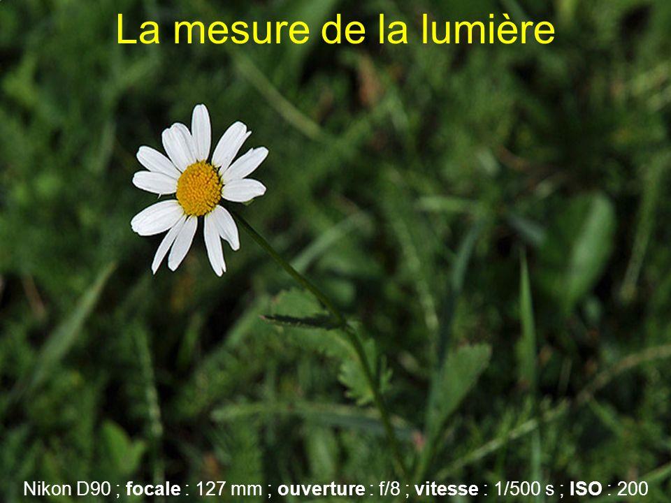 La mesure de la lumière Nikon D90 ; focale : 127 mm ; ouverture : f/8 ; vitesse : 1/500 s ; ISO : 200.