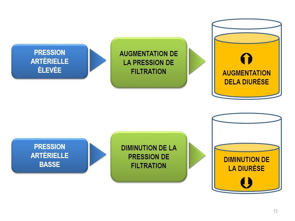   AUGMENTATION DE LA PRESSION DE FILTRATION PRESSION ARTÉRIELLE