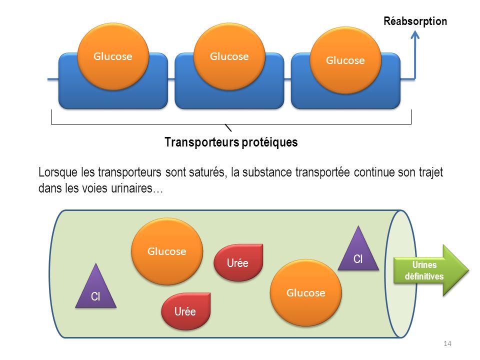 Transporteurs protéiques