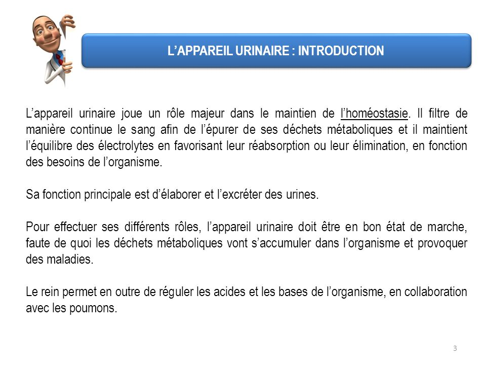 L'APPAREIL URINAIRE : INTRODUCTION