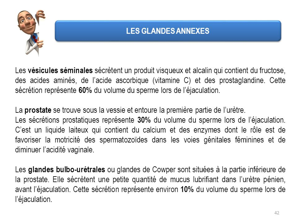 LES GLANDES ANNEXES