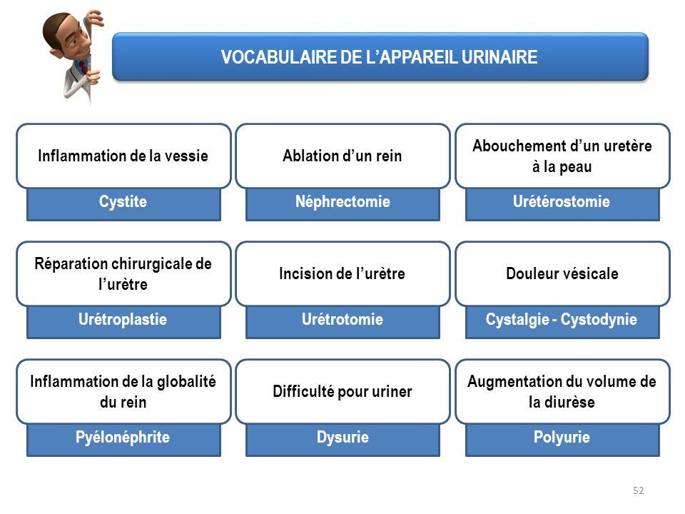 VOCABULAIRE DE L'APPAREIL URINAIRE