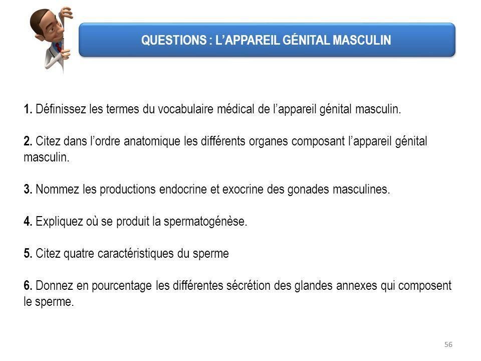QUESTIONS : L'APPAREIL GÉNITAL MASCULIN