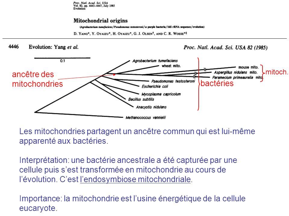 ancêtre des mitochondries bactéries